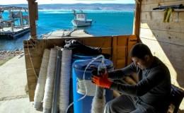 U tijeku provođenje projekta DORY - prijenosa novozelandske tehnologije uzgoja daganja na uzgojne farme Zadarske županije